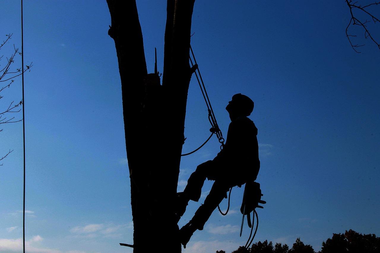 Esecuzione in sicurezza di lavori su alberi con funi: circolare ministeriale 1